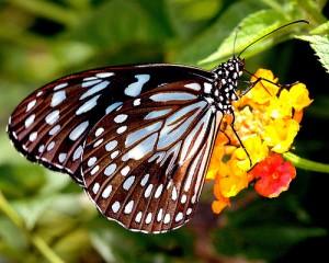Schmetterlingsfarm Bohol