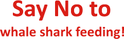 Say No to whale shark feeding